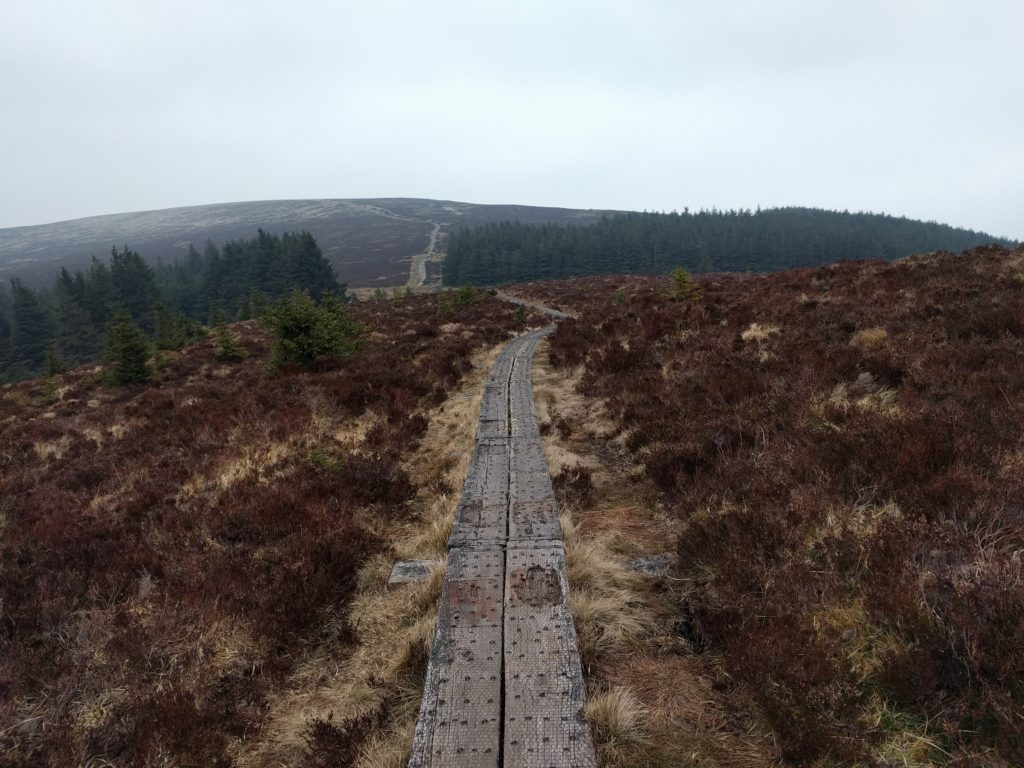 Boardwalk crossing ground covered in heather