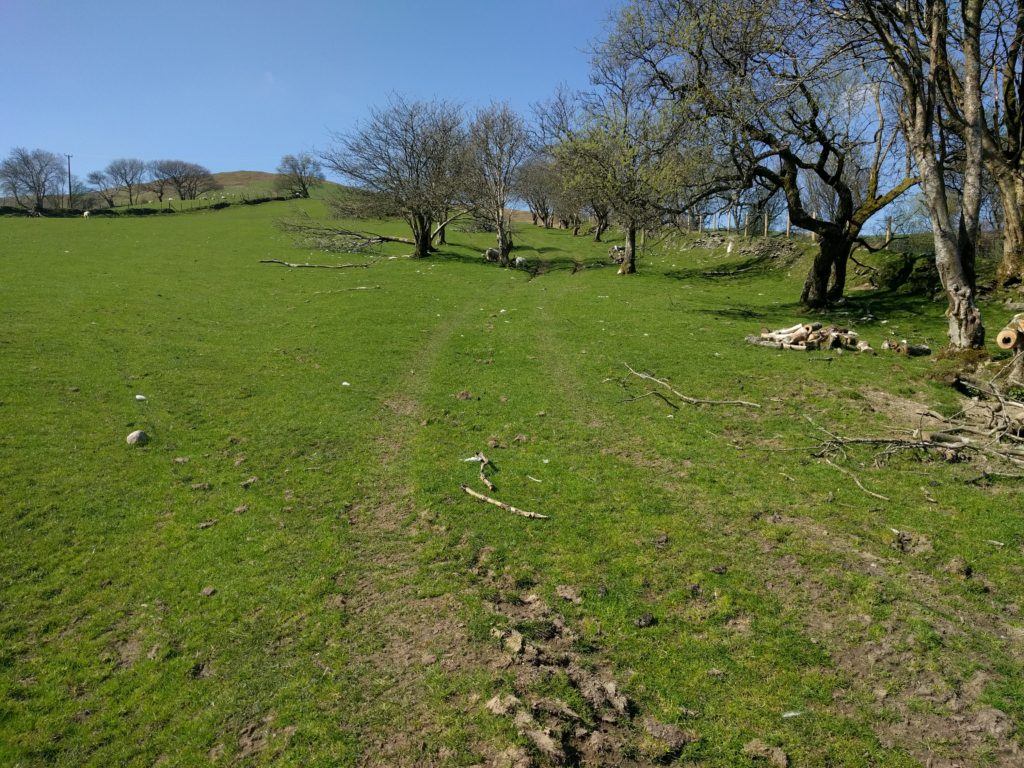 Grass path through field with trees