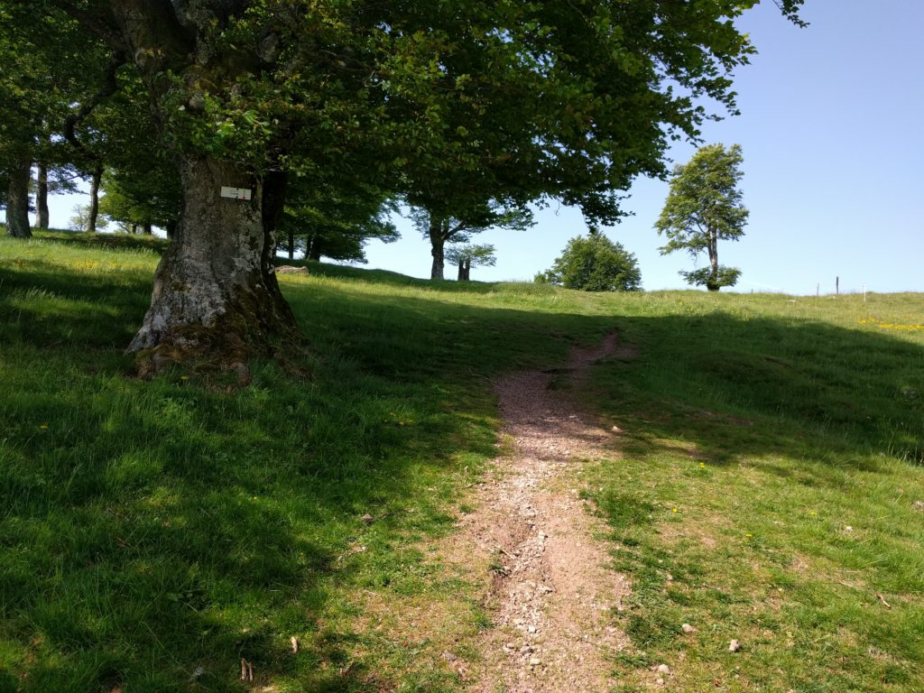 Path under a tree on a sunny day