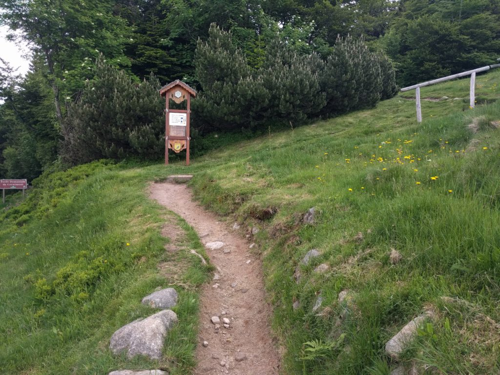 Gentle path with wooden signpost